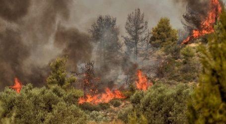 Πυρκαγιά σε δασική έκταση στην Κάρυστο