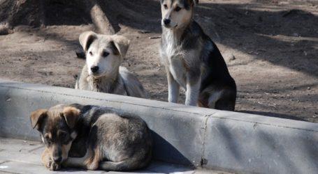 Με συλλήψεις και παραπομπή στο Αυτόφωρο απειλούνται όσοι κακοποιούν ζώα