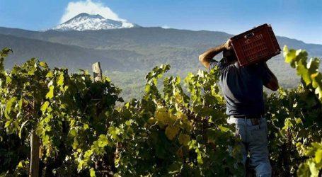 Αύξηση 81,19% στα αποθέματα οίνου