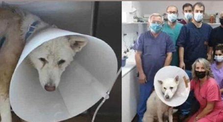 Ο σκύλος που μαχαιρώθηκε στη Νίκαια επιστρέφει στον ιδιοκτήτη του!