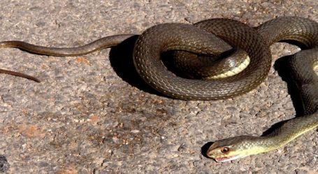 Φίδι «εισέβαλε» σε καφετέρια του Βόλου