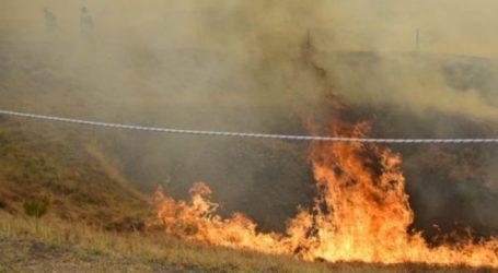 Φωτιά στο Φυτόκο – Στις φλόγες και δέντρο στον Βόλο