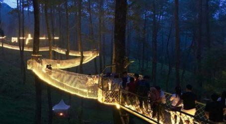 Ινδονησία: Φωτεινή γέφυρα ανάμεσα στα δέντρα προσφέρει μαγικές εικόνες στο δάσος!