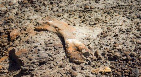 Καναδάς: 12χρονος ανακάλυψε τυχαία σκελετό δεινοσαύρου
