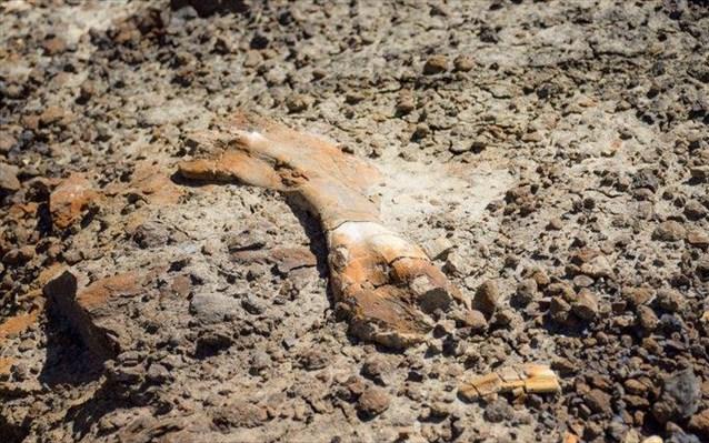 kanadas 12xronos anakalupse tuxaia skeleto deinosaurou