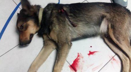 Βόλος: Μαχαίρωσαν σκύλο στον Άγιο Νεκτάριο – Σοκαριστικές εικόνες