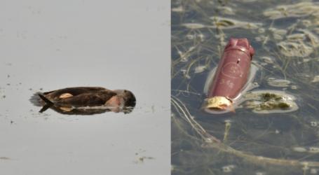 Έγκλημα στην Κάρλα – Σκότωσαν σπάνια πουλιά για δεύτερη φορά [εικόνες]