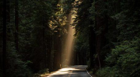 Τρίκαλα: Βρέθηκε νεκρός άντρας στο δάσος Ροπωτού