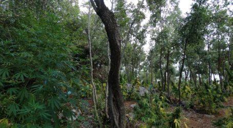 Λάρισα: Βρέθηκαν σακιά με 40 κιλά χασίς σε απόκρημνη περιοχή μετά τα βασιλικά κτήματα – Αναζητούνται 5 άτομα ηλικίας 20-33 ετών