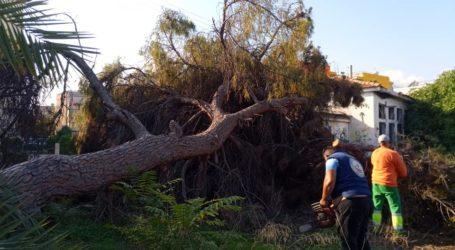 Ξυλεία για άπορους Βολιώτες από πεσμένα δέντρα [εικόνες]
