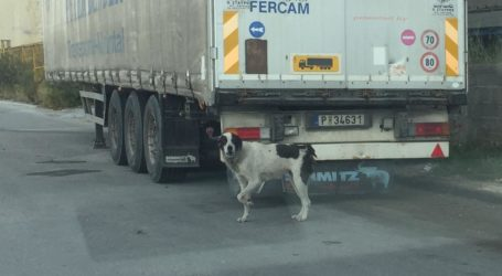 Γέμισε αδέσποτα σκυλιά η Α' Βιομηχανική Περιοχή Βόλου [εικόνες]