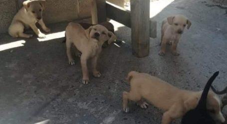 Θανάτωσαν επτά αδέσποτα κουτάβια στο Ηράκλειο της Κρήτης
