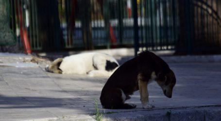 Έρευνα στην Κατερίνη για την δηλητηρίαση αδέσποτων σκύλων
