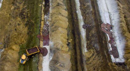 Δανία: Bιζόν-«ζόμπι» βγαίνουν από τον τάφο μετά τη μαζική σφαγή