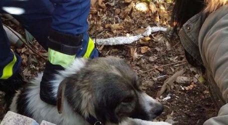 Βόλος: Πυροσβέστες διέσωσαν σκύλο
