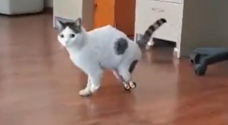Ο πρώτος αδέσποτος γάτος στην Ελλάδα περπατάει με τεχνητά πόδια χάρη σε μια Λαρισαία (βίντεο)