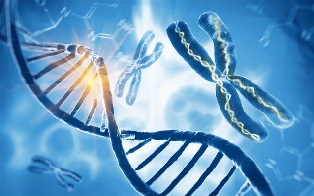 dna xromosoma gonidio