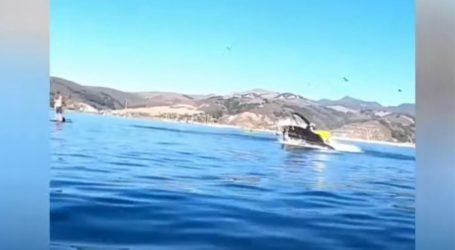Φάλαινα «κατάπιε» δύο γυναίκες που έκαναν καγιάκ στην Καλιφόρνια – Δείτε βίντεο