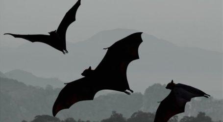 Νυχτερίδες «προβλέπουν το μέλλον» μέσω ηχοεντοπισμού