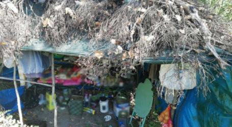 Λάρισα: Φυτεία χασίς μισό στρέμμα βρέθηκε στο Ρακοπόταμο – Όπως όπως την εγκατέλειψαν οι καλλιεργητές που είχαν στήσει 6 ξύλινες παράγκες