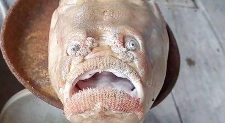 Το ψάρι με τα ανθρώπινα μάτια, είναι το πιο τρομακτικό ψάρι που έχεις δει