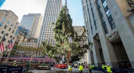 Αξιαγάπητη κουκουβάγια ταξίδεψε μέχρι τη Νέα Υόρκη με το φορτηγό που μετέφερε το χριστουγεννιάτικο δέντρο στο Rockefeller Center