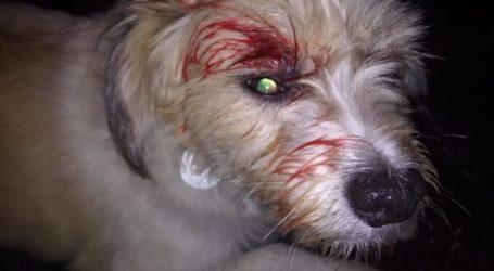 """Οργή: Επικίνδυνος ή ψυχανώμαλος """"μπούκαρε"""" σε σπίτι στον Τύρναβο και τραυμάτισε σκυλάκι"""