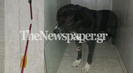 Βόλος: Τι είπε στον εισαγγελέα ο 32χρονος δράστης της επίθεσης σε σκύλο με βέλος