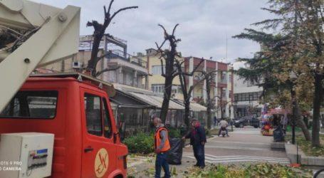 Δήμος Τυρνάβου: Έκοψε επικίνδυνα κλαδιά δέντρων (φωτο)