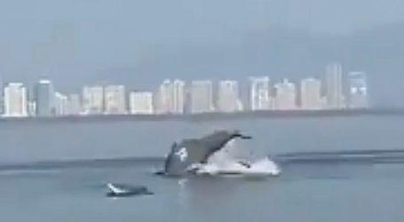 Ινδία : Δελφίνια καταγράφηκαν να κολυμπούν «χορεύοντας» σε ακτή – Βίντεο