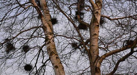 Μήνυση κατά αγνώστων από τον Δήμο Γαλατσίου για παράνομο κόψιμο δέντρων