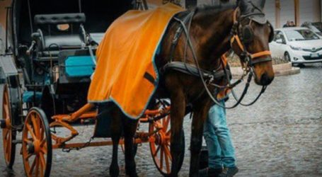 Η Ρώμη απαγορεύει τις άμαξες με τα άλογα από τους δρόμους της