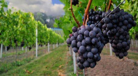 Έκτακτες οικονομικές ενισχύσεις στην καλλιέργεια οινοποιήσιμων σταφυλιών ζητά η ΚΕΟΣΟΕ