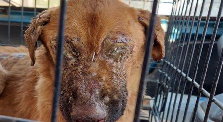 Επιτέθηκαν με οξύ σε σκυλίτσα και την τύφλωσαν