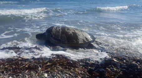 Διάσωση θαλάσσιας χελώνας από πλήρωμα ταχυπλόου της βάσης υποβρυχίων