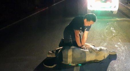 Έσωσε ελεφαντάκι με CPR