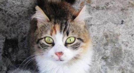 Προσοχή: Φόλες στο κέντρο του Βόλου – Νεκρή μία γάτα