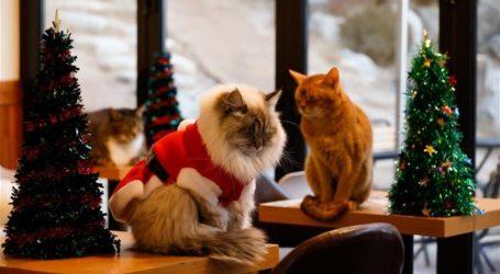 Το στέκι της γάτας ετοιμάζεται για τα Χριστούγεννα