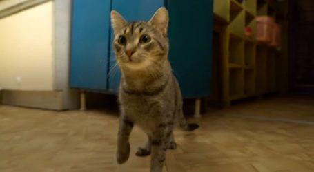 Γάλλος δισεκατομμυριούχος έδωσε την περιουσία του στις 50 γάτες του μουσείου Ερμιτάζ