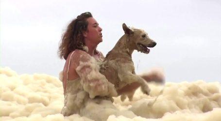Αυστραλία: Η δραματική διάσωση ενός σκύλου από την αφρισμένη θάλασσα
