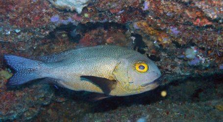 Ανακαλύφθηκε το γηραιότερο τροπικό ψάρι του κόσμου: Έχει «ζήσει» τον Β' Παγκόσμιο Πόλεμο (pics)
