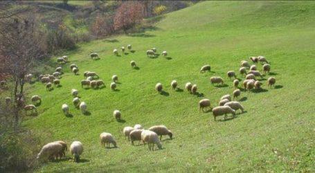 Δήμος Ελασσόνας: Μέχρι τις 31/12 η ενημέρωση των κτηνοτρόφων για το βοσκότοπο