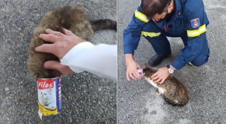 Βόλος: Γάτα σφήνωσε σε κονσέρβα – Σώθηκε χάρη στον Δ. Μεντεκίδη & την Πυροσβεστική