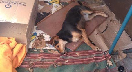 Φρίκη στο Βελεστίνο: Δηλητηρίασαν τη σκυλίτσα – μασκότ