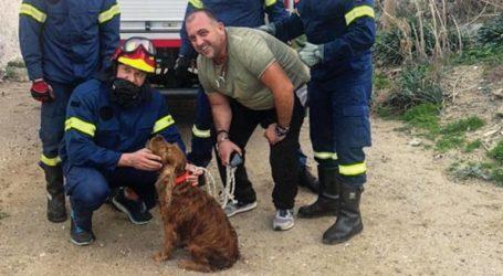 Συγκινητική διάσωση σκύλου που έπεσε σε πηγάδι στη Μύκονο