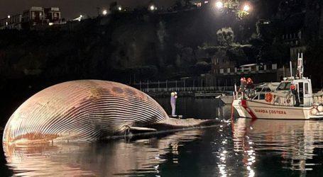 Νεκρή ανασύρθηκε μια από τις μεγαλύτερες φάλαινες της Μεσογείου