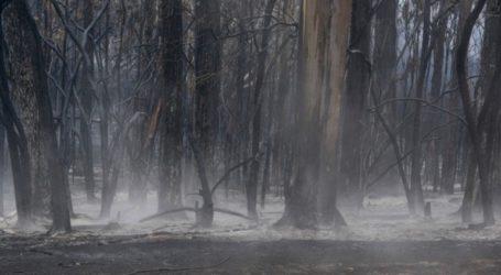 Πυρκαγιά κατέκαψε 65.000 στρέμματα δασικών εκτάσεων