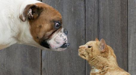 Κ. Λεχώνια: Δεσποζόμενα σκυλιά κατασπάραξαν γάτα σε αυλή σπιτιού