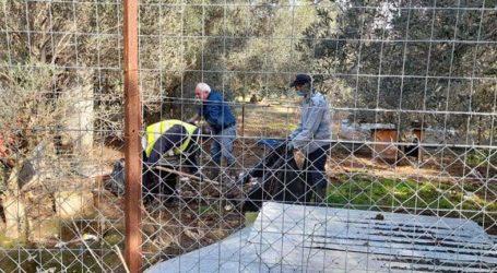Παρέμβαση Κοπάνα στον τόπο μαρτυρίου 11 σκύλων στη Ν. Αγχίαλο [εικόνες]