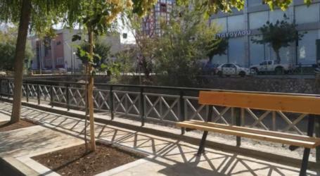 Δημοτικό Συμβούλιο Βόλου: Αντίθετες οι μειοψηφίες στο κόψιμο δέντρων στην οδό Ζάχου